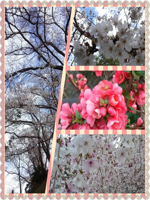 Photogrid_1364461990266_r_2