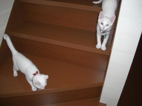 初めての階段(その2)