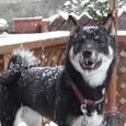 初めての雪(その2)